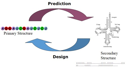RNAPredict_Design.png